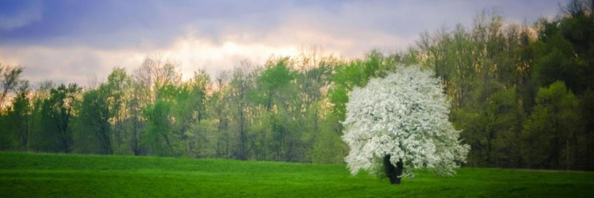 summer-tree-slider